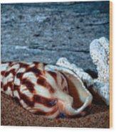 Coquina Shell Wood Print