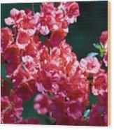 Coral Azaleas Wood Print