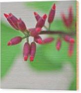 Coral Bean Plant Wood Print