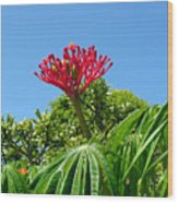 Coral Bush With Flower And Fruit Wood Print