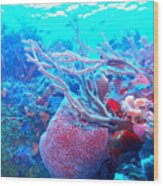 Coral Candy Wood Print
