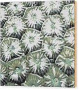 Coral Close Up  Wood Print
