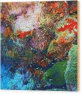 Coral Eel Wood Print