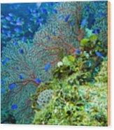 Coral In Truk Wood Print