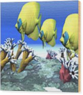 Coral Moods Wood Print by Corey Ford