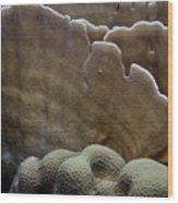 Coral On Dantchi Delight Reef Aruba Wood Print
