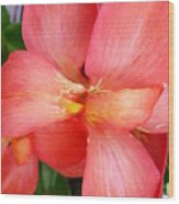 Coral Orchid Wood Print