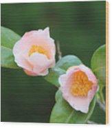 Coral Camellia 2 Wood Print
