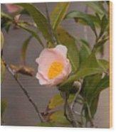 Coral Camellia Wood Print