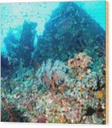 Coral Pyramid Wood Print