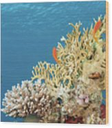 Coral Reef Eco System Wood Print