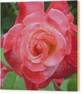 Coral Rose Wood Print