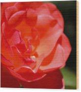 Coral Rose Focus Left Wood Print