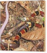 Coral Snake Snack Wood Print