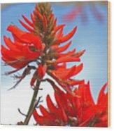 Coral Tree Blooms Wood Print