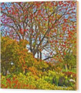 Flame Tree Wood Print