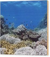 Corals Garden Wood Print