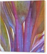 Cordyline Rainbow Leaves Wood Print