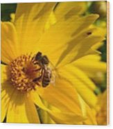 Coreopsis Beauty And The  Bee. Wood Print