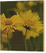 Coreopsis Wood Print