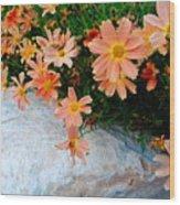 Coreopsis Sienna Sunset Wood Print