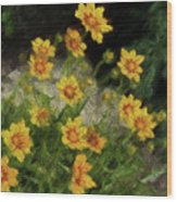 Coreopsis Tickseed Wood Print