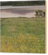 Corepsis Blooming At The Quanah Parker Lake Wood Print