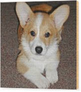 Corgi Puppy Lying Down Wood Print by Laurie With