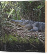 Corkscrew Swamp - Really Big Alligator Wood Print