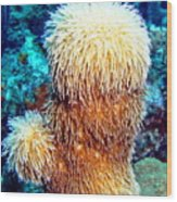 Corky Sea Finger Coral - The Muppet Of The Deep Wood Print