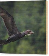 Cormorant 7 Wood Print