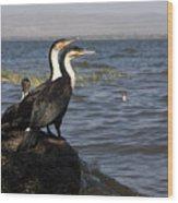 Great Rift Cormorants Wood Print