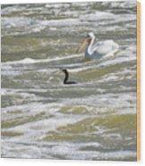 Cormorant And Pelican Wood Print