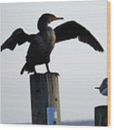 Cormorant And Seagull Wood Print