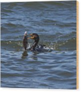 Cormorant Catching A Porgy Wood Print