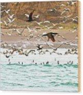 Cormorant Flight In Frenzy Wood Print