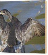 Cormorant looking back Wood Print