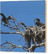 Cormorant Teenager In Nest Begging For Food Wood Print
