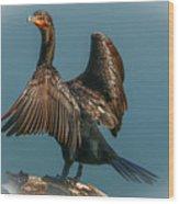 Cormorant Wings Wood Print