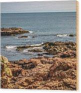 Cormorants And Seagulls Resting Wood Print
