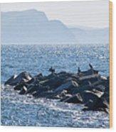 Cormorants At The Cobb - Lyme Regis Wood Print