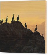 Cormorants On A Rock With Golden Sunset Sky Wood Print