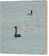 Cormorants On The Lake Wood Print