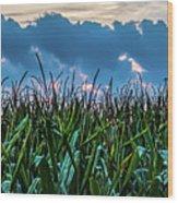 Corn And Clouds Panorama Wood Print