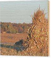 Corn At Harvest Wood Print