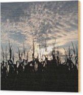 Corn At Sunrise Wood Print