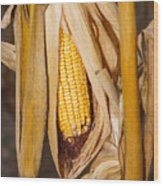 Corn Cobb On Stalk Wood Print