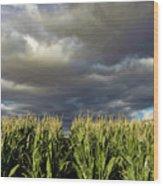 Corn Field Beform Storm Wood Print