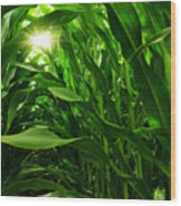 Corn Field Wood Print by Carlos Caetano