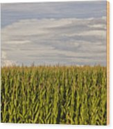 Corn Field In Sunset Wood Print